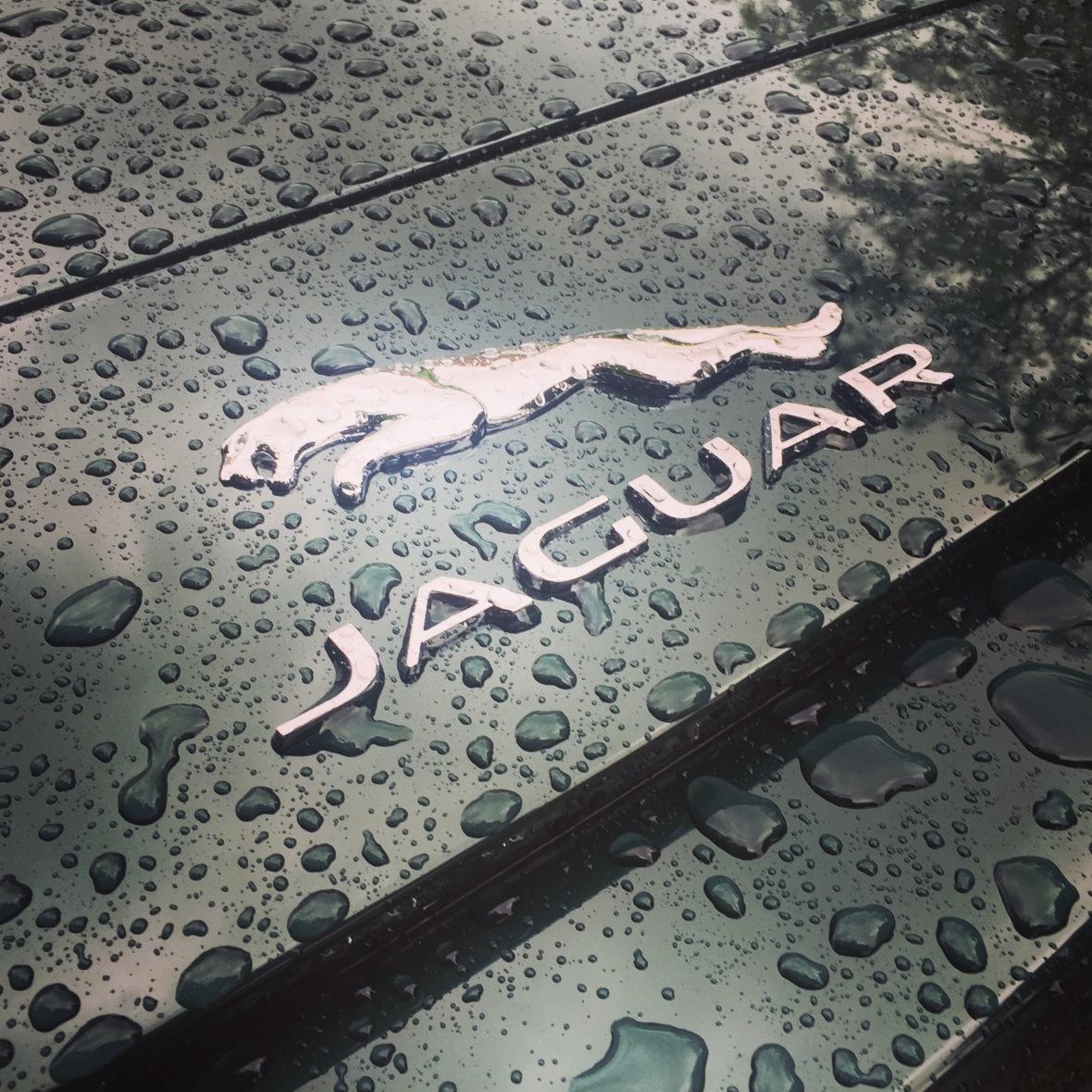 I regnvejr kan selv basis-F-Typen med 340 hk blive giftig, men ikke så dødeligt som storebror.